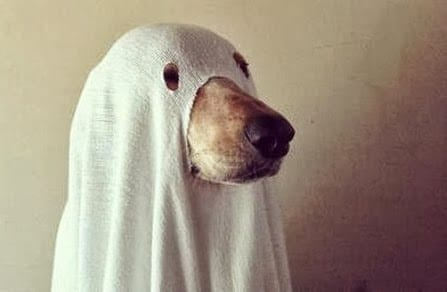 Avoid costumes unless your dog openly enjoys dressing up