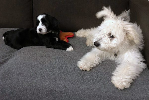 Well-soclialized puppies make better friends