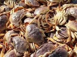 Aquatic Sports Dungeness crab dive
