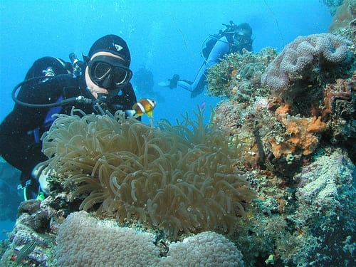 See coral reefs and sponges