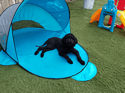 Stay Pet offers lots of ways to stay cool in summer!